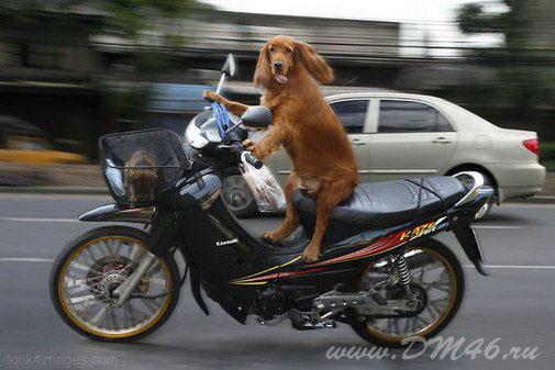 Интересно необычные мотоциклы фото